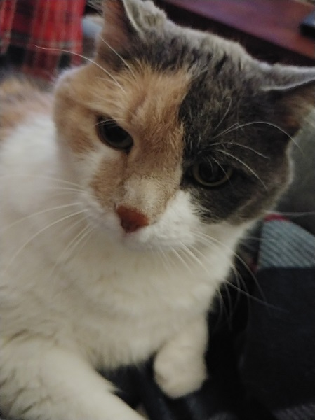 Rita Cat